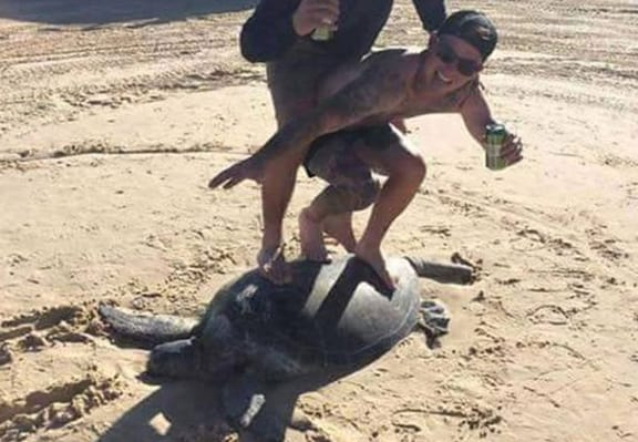 'Complete Idiots' Slammed By RSPCA After Surfing On Top Of Turtle
