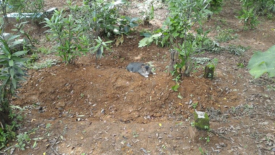 swns_cat_grave_04