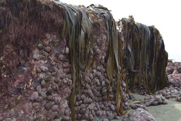 alien-rocks-new-zealand-formations-video-562713