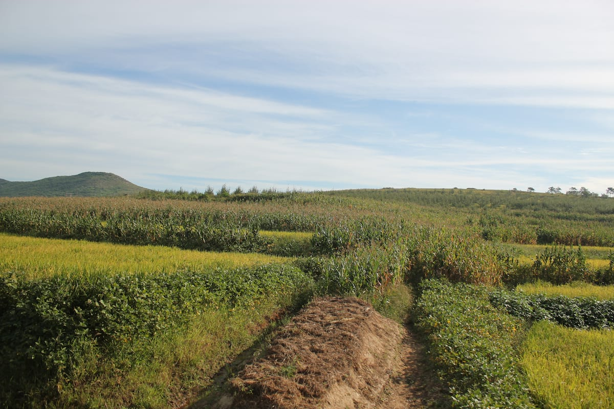 Vegans And Vegetarians Actually Help Kill Animals, Heres How 30300UNILAD imageoptim Potato Mound near Nampo North Korea