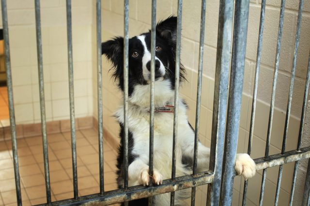 Animal Shelter Accused Of Killing 2,000 Cats And Dogs Slowly And Painfully 33006UNILAD imageoptim GettyImages 95572872 640x426