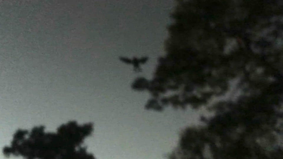 Creepy Photo Shows Mothman Monster Leaping Between Trees 33732UNILAD imageoptim nintchdbpict000284547796