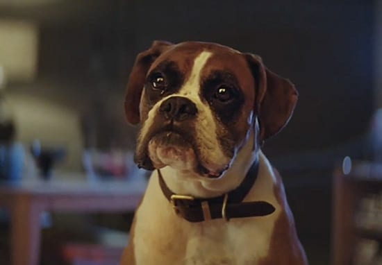 Dog, John Lewis Christmas Advert