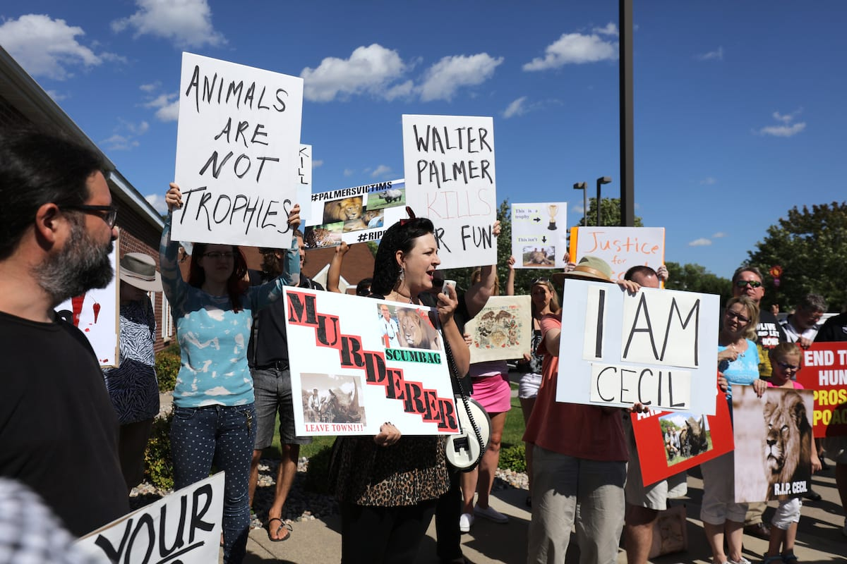 Walter-Palmer-gettyimages-482298078