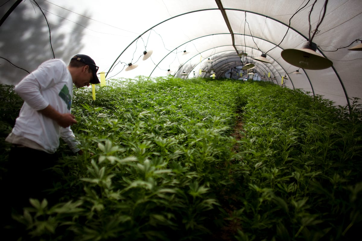 How UK Weed Growers Are Trying To Avoid Prosecution 972 GettyImages 109913266