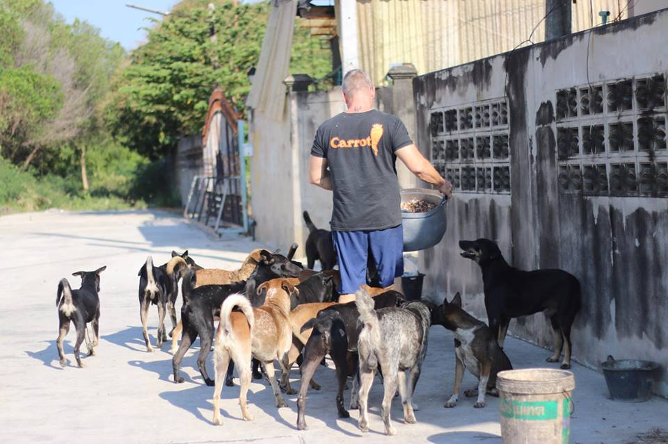 This Man Fell In Love With Thailands Stray Dogs And Now Feeds 80 Every Day baines 1