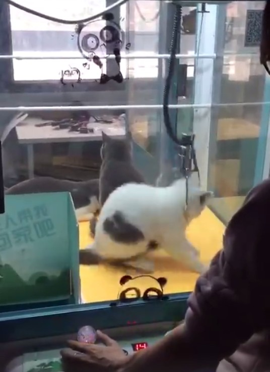 Disturbing Images Show Live Cats Inside Arcade Claw Machine 2017 04 09 130635