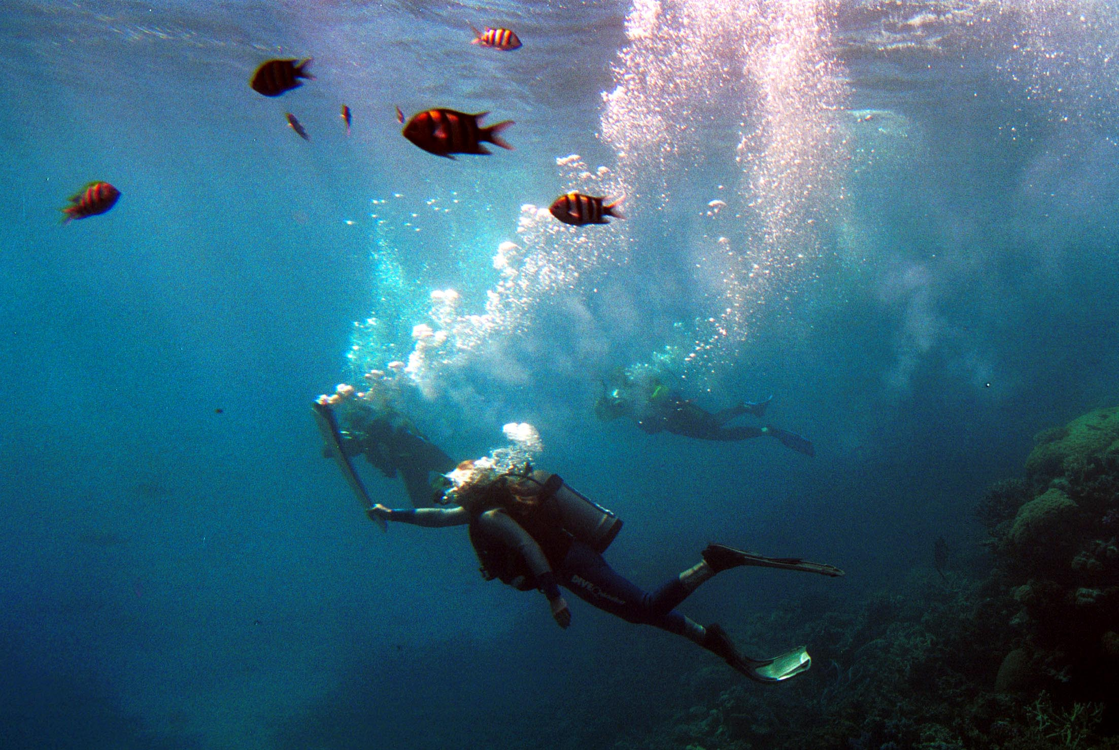 The Great Barrier Reef Can No Longer Be Saved GettyImages 1041980