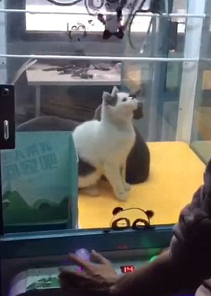 Disturbing Images Show Live Cats Inside Arcade Claw Machine cat grab 3