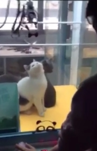 Disturbing Images Show Live Cats Inside Arcade Claw Machine cat grab 4