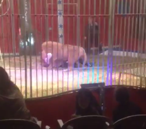 Lion Tamer Savaged In Front Of Shocked Audience At French Circus