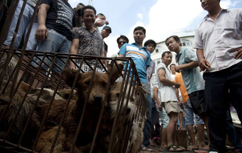 Traders looking at dogs ready to be sold for meat