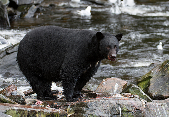 Teen Killed By Bear Sent Text To Brother While Being Chased