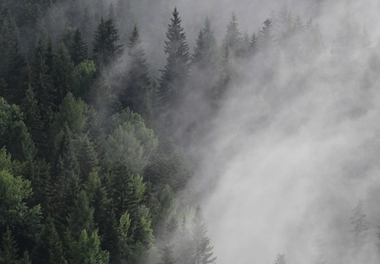 New Northern Forest Of 50 Million Trees To Be Planted In UK Misty Forest