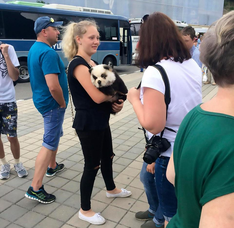 Man Caught Scamming Tourists By Dyeing Dog To Look Like Baby Panda nintchdbpict000336830435 960x936