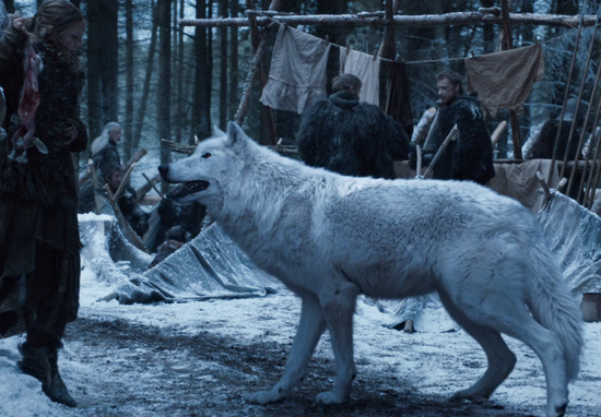 Ghost the direwolf.