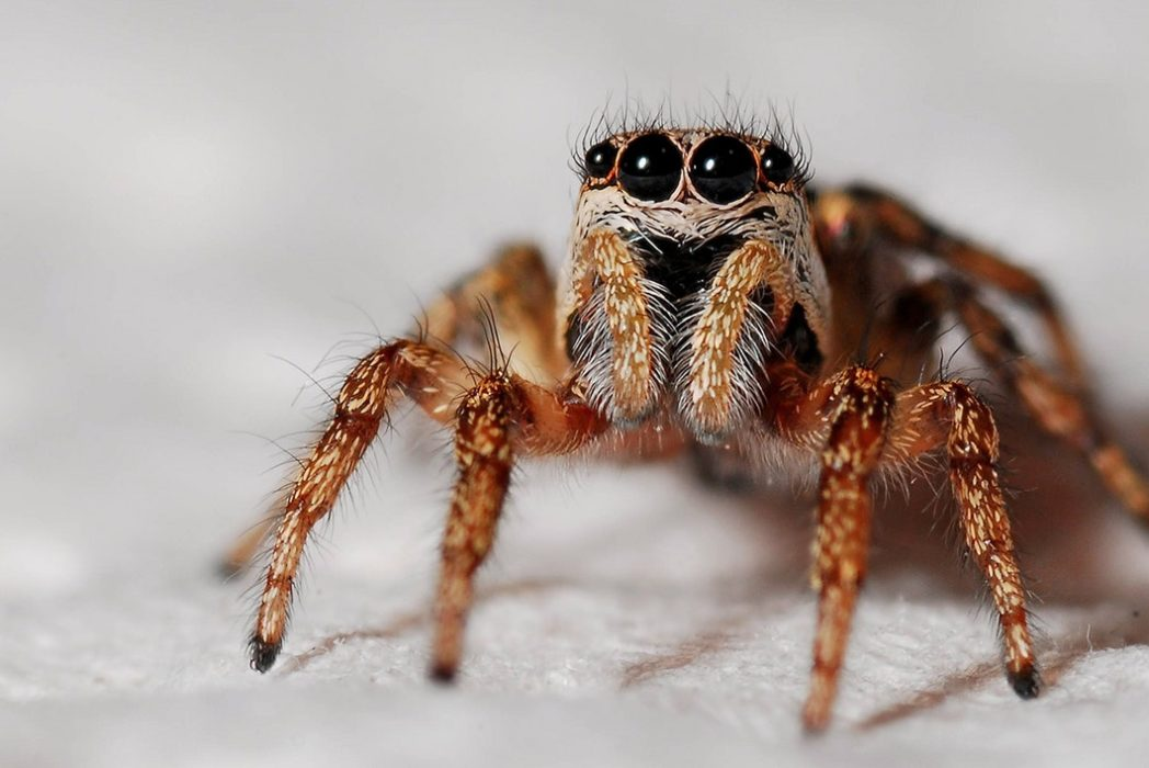 Spiders Could Eat The Entire Human Race In Just One Year If They Wanted %name