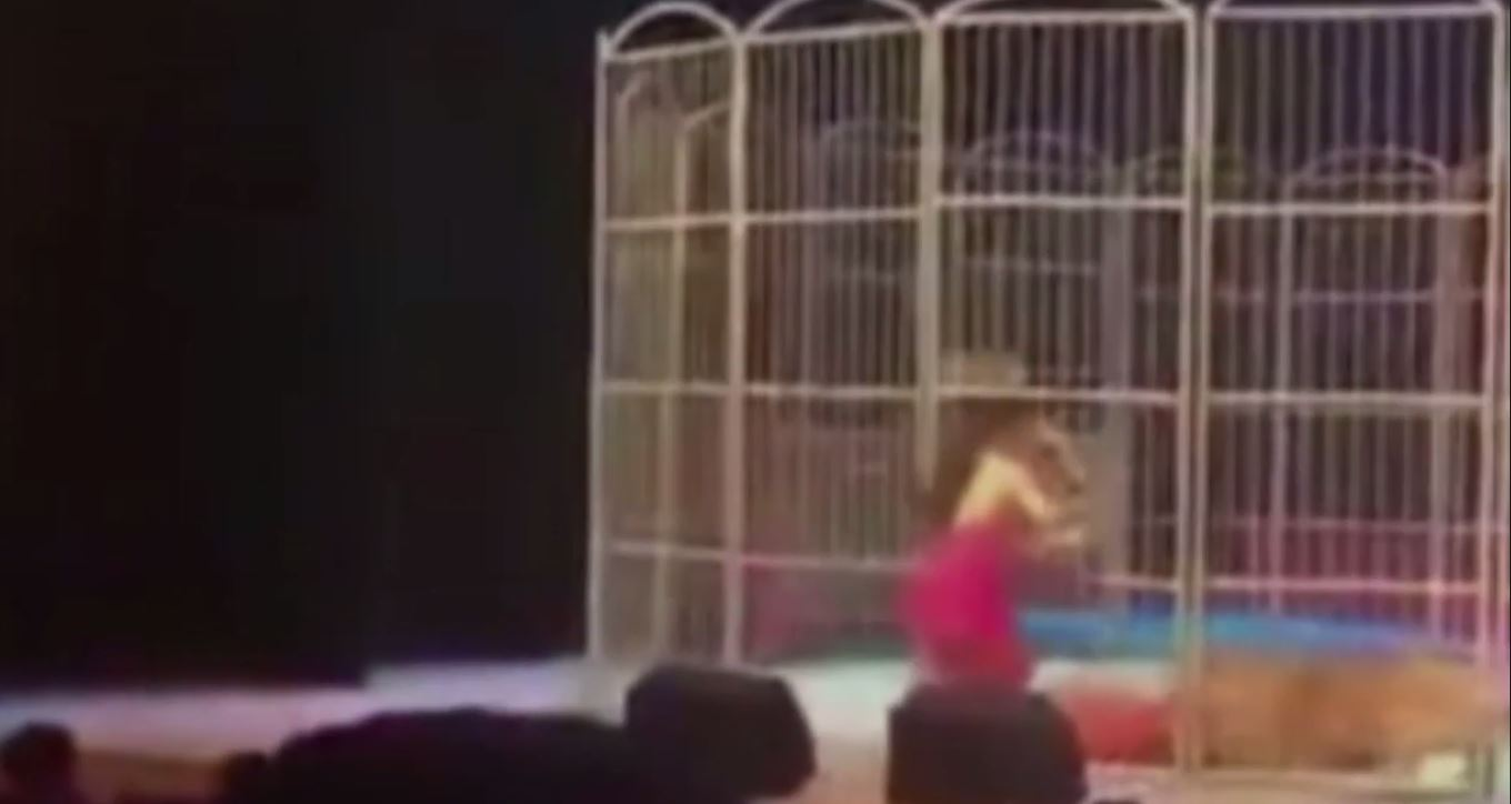 Circus Trainer Mauled By Tiger In Front Of Thousands Of People tiger attack 2