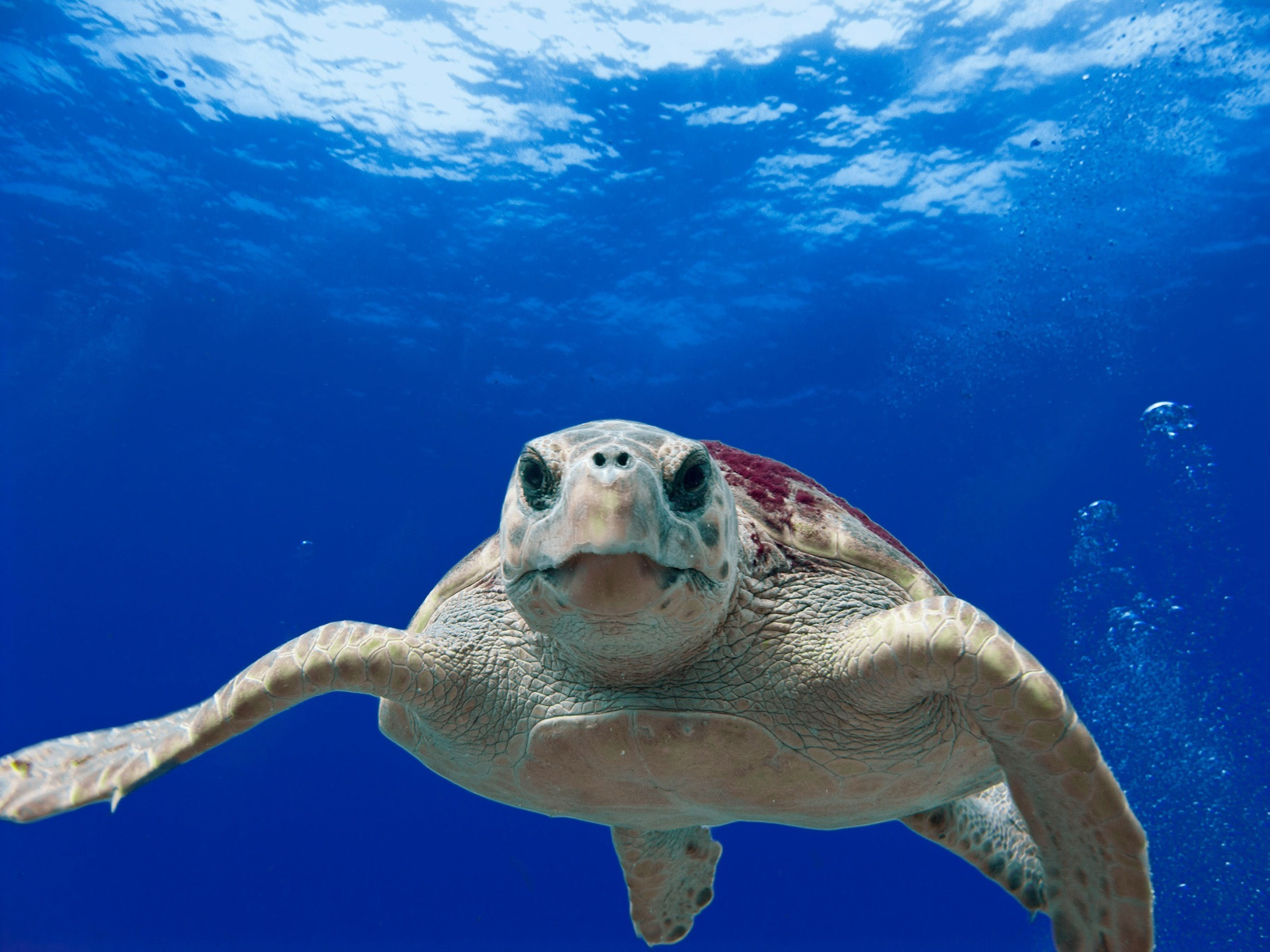 A turtle swimming in the sea