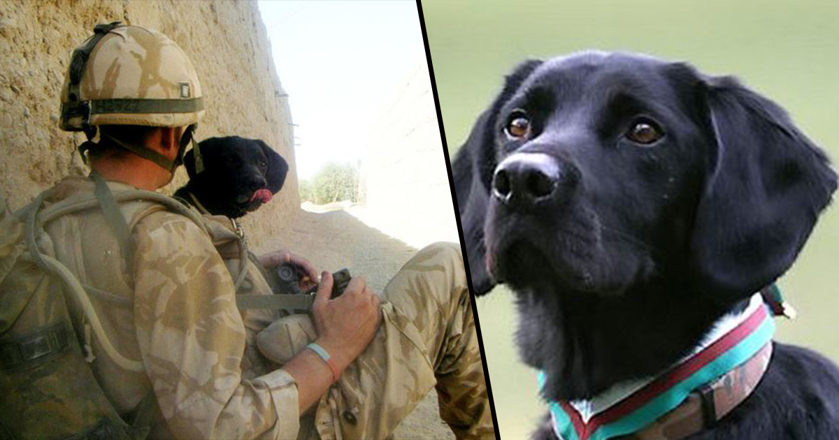 Army Dog Becomes Best Friend And Never Leaves His Master's Side