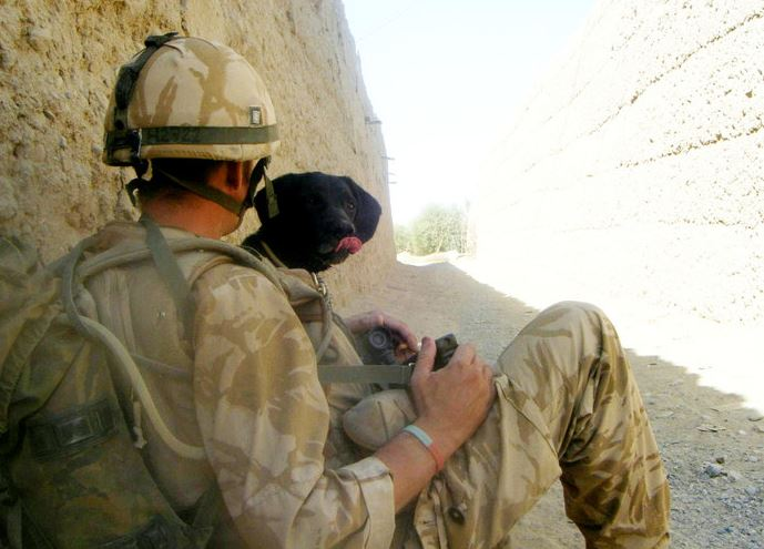 Army Dog Becomes Best Friend And Never Leaves His Masters Side treo war