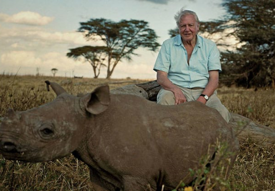 Sir David Attenborough Furious With Bear Grylls Over Scene In New Series David Attenborough A