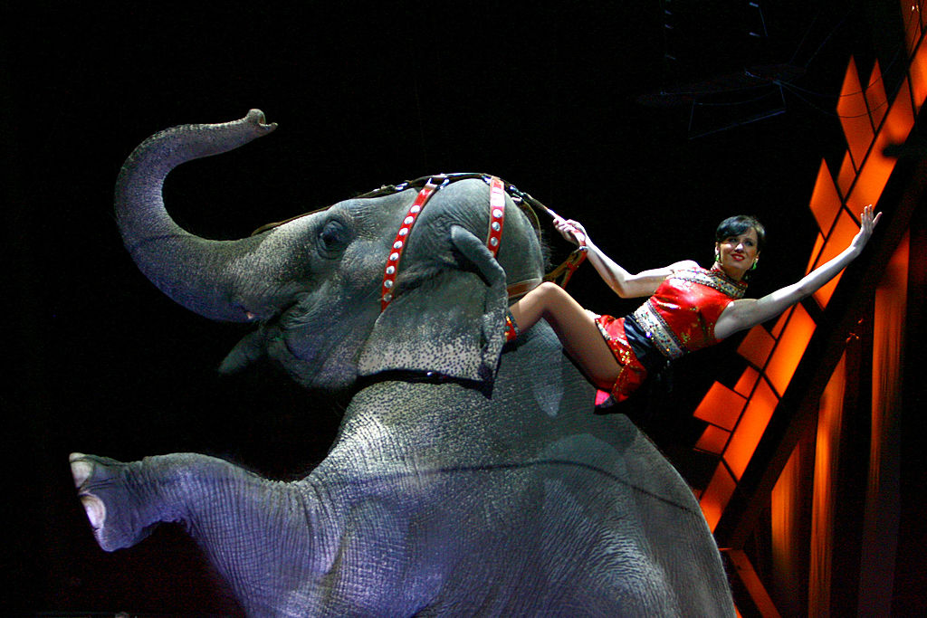 Wild Animals Banned From Circuses In Britain GettyImages 73778472