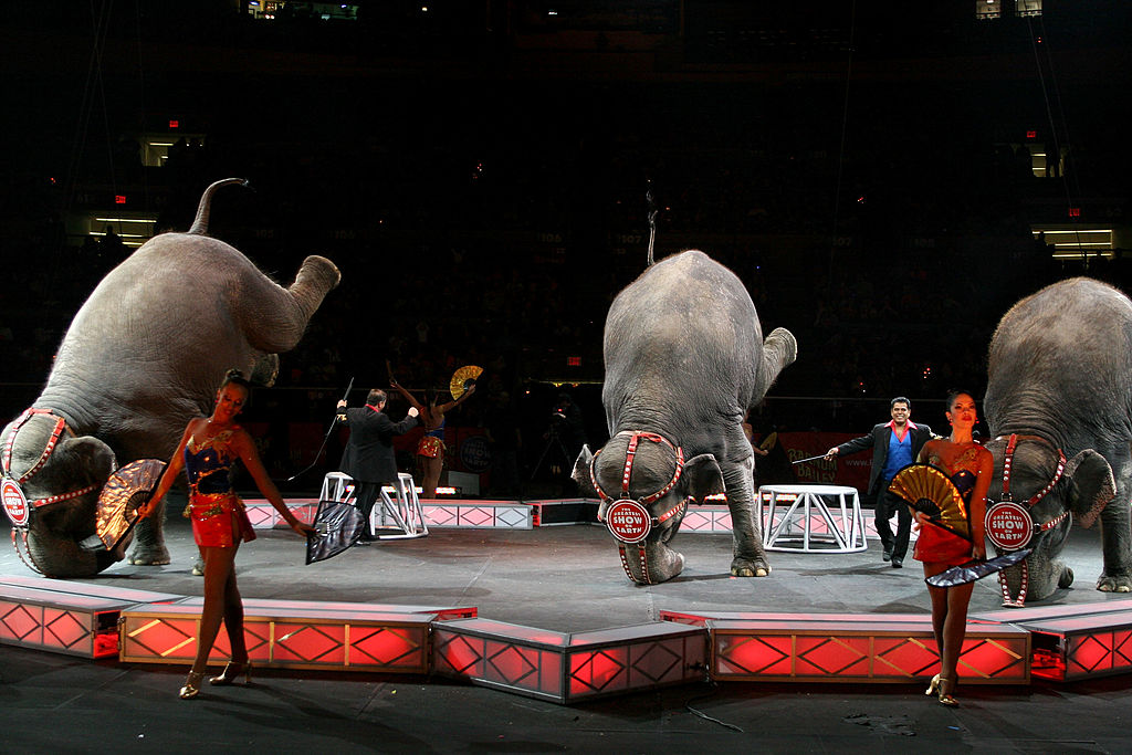 Circuses Have Been Banned From Using Elephants GettyImages 73778476