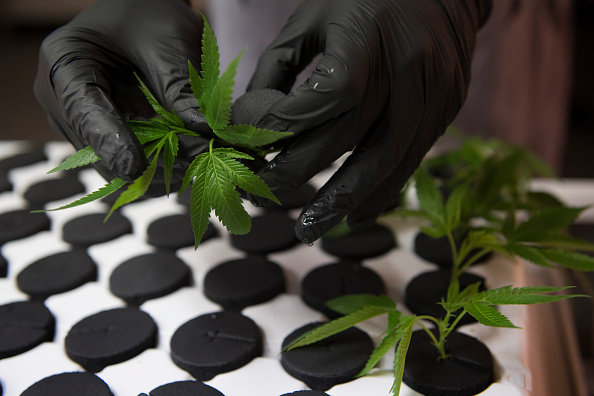 Legalising Marijuana Has Significantly Reduced Crime In US, Study Says GettyImages 824729264