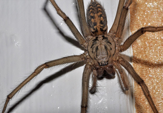 Man Burns Down Apartment Trying To Kill Huge Spider With Fire Spider1 web