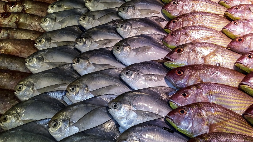 Our Oceans Will Run Out Of Fish By 2048 fish 1054207 960 720