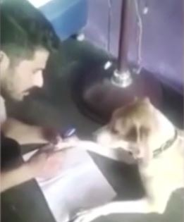 Man Beats Dog Because It Cant Learn The Alphabet man dog