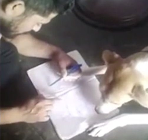 Man Beats Dog Because It Cant Learn The Alphabet pri 58200740 e1509361576481