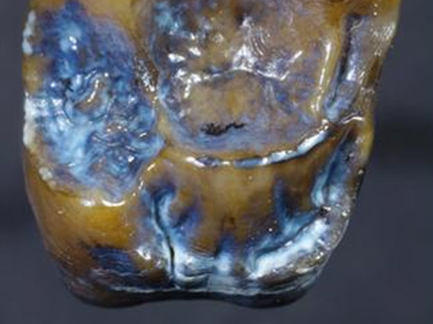 New Discovery Could Rewrite Human History, Archaeologists Say tooth discovery 624x468
