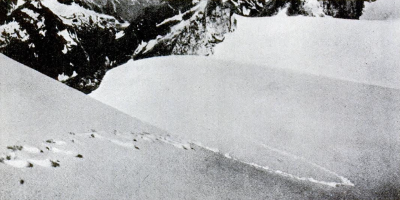 Mystery Of Yeti Has Finally Been Solved 1937 yeti footprints