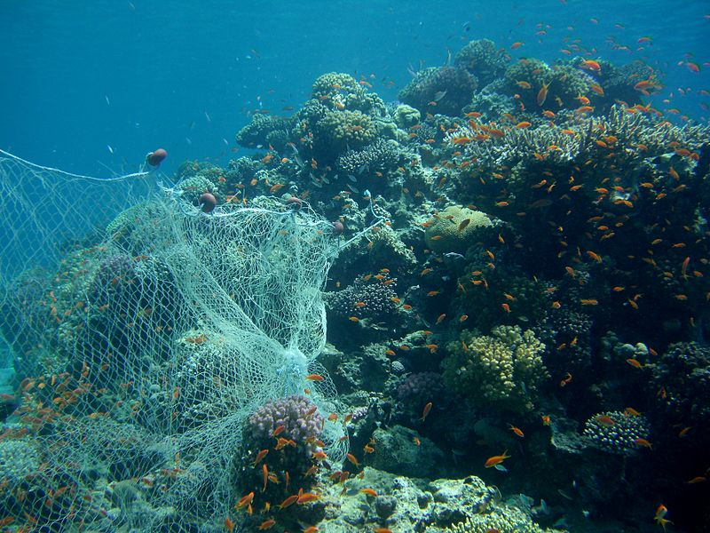 Our Oceans Will Run Out Of Fish By 2048 800px CIMG2733 Fishing Net On Reef 2692835363