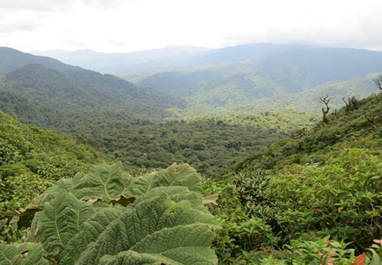Costa Rica Runs On Renewable Energy For 300 Days Costa Rica A