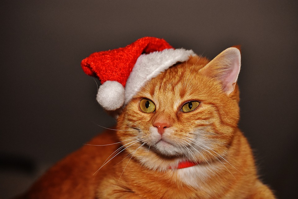 A Christmas Market For Dogs Is Launching In UK Cute Christmas Santa Hat Funny Cat Red Mackerel 1898512