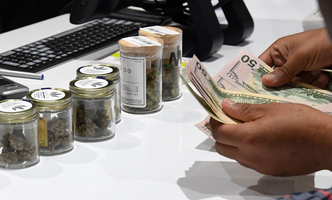 Californians Can Now Legally Grow And Buy Cannabis GETTY WEED 2