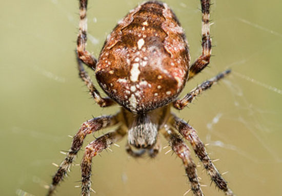 Most Dangerous Spiders In UK Set To Invade Our Homes Spider