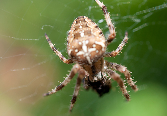 Most Dangerous Spiders In UK Set To Invade Our Homes Spider2