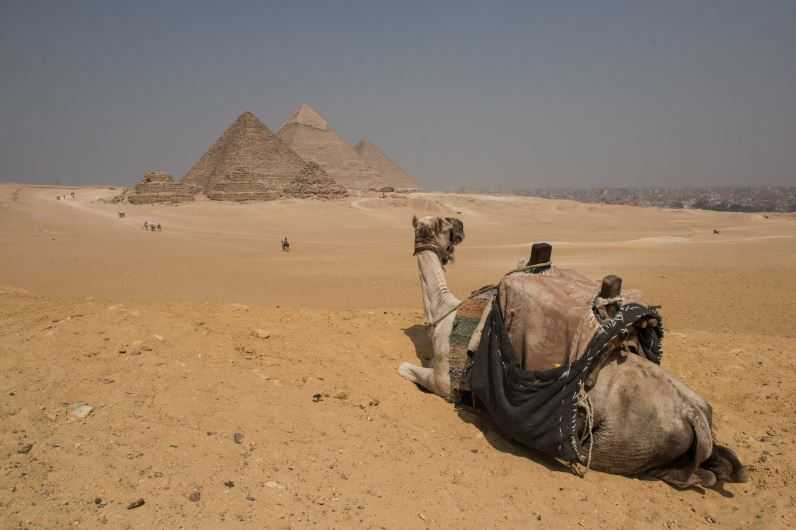 Scientists Make Incredible Discovery Inside Great Pyramids Of Giza camel pyramid4