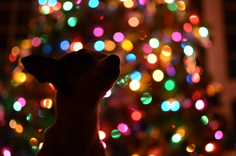 A Christmas Market For Dogs Is Launching In UK dog 1219086 960 720