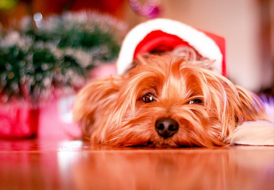 Today Is Officially The Saddest Day Of The Year dog christmas market web