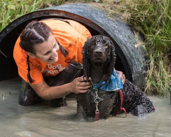 Muddy Obstacle Course For Dogs And Their Owners Coming To UK dog runs in mud 583x468