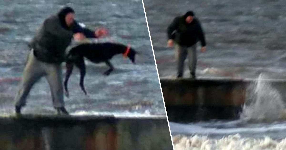 Man Filmed Repeatedly Throwing Greyhound Into Freezing Sea dog thumbnail