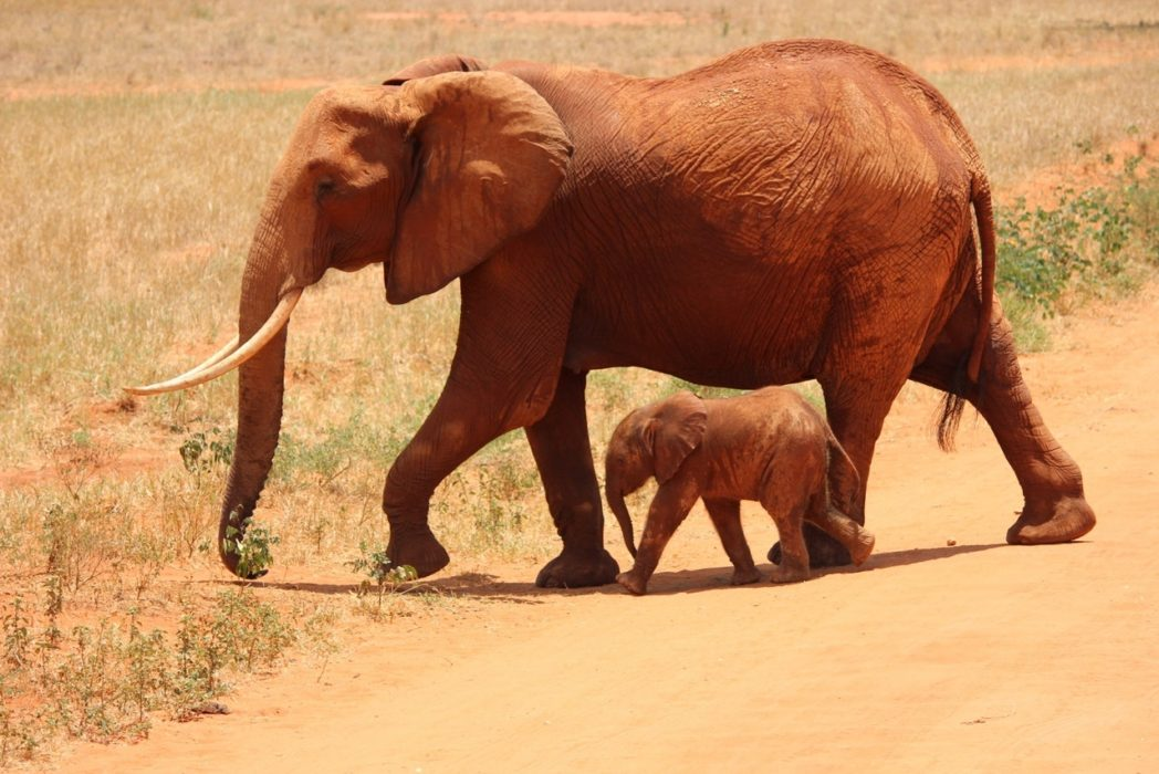 China Just Completely Banned Legal Ivory Trade %name