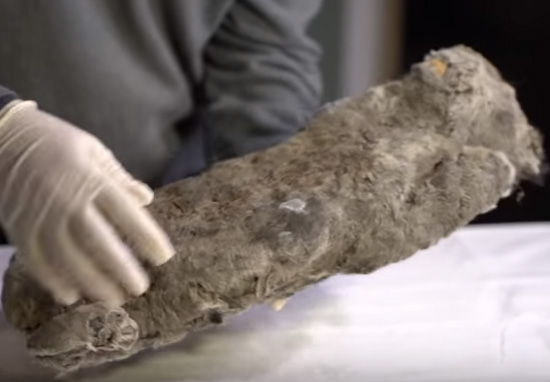 Scientists To Bring 50,000 Year Old Lion Back To Life lion cub c