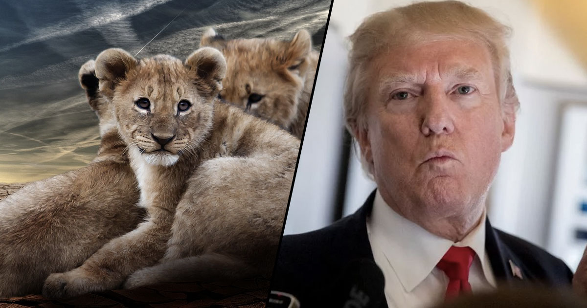 Image result for Trump Lifts Another Ban So Hunters Can Continue Slaughtering Innocent Lions