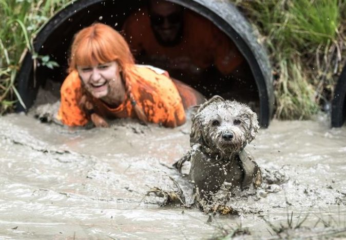 Muddy Obstacle Course For Dogs And Their Owners Coming To UK muddy dog laughing owner 674x468
